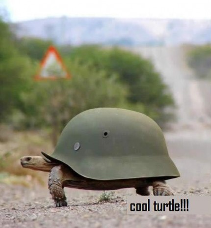 A cool turtle - Photos Unlimited