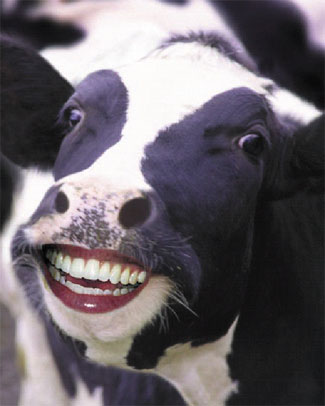 HappyCow_1_.jpg