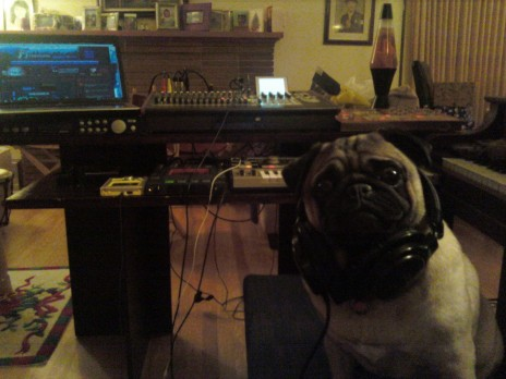 pug_studio.jpg