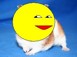 250px_Goldhamster_2.jpg