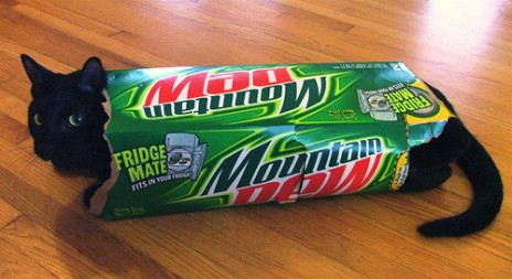 MountainDewCat.jpg