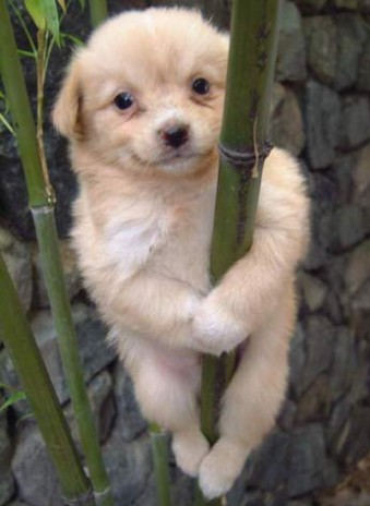 pole_dancing_dog.jpg