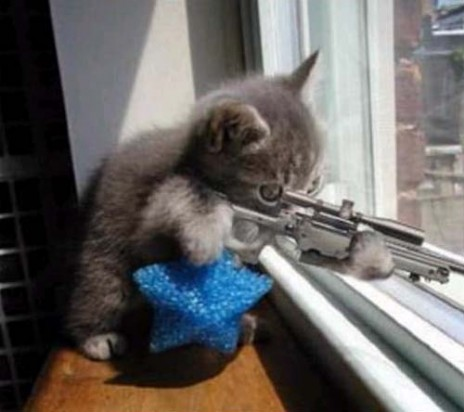 sniper_cat.jpg